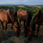 Kapolcs lovakkal