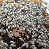 BazsonBazsongó Tradicionális Méhészeti szövetkezésgo