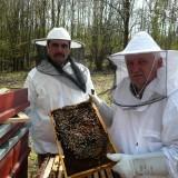 Bazsongó Tradicionális Méhészeti szövetkezés